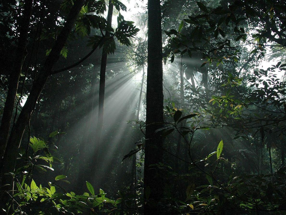 Raios de sol penetram a cúpula de folhas de uma floresta tropical da Indonésia, na Ilha ...