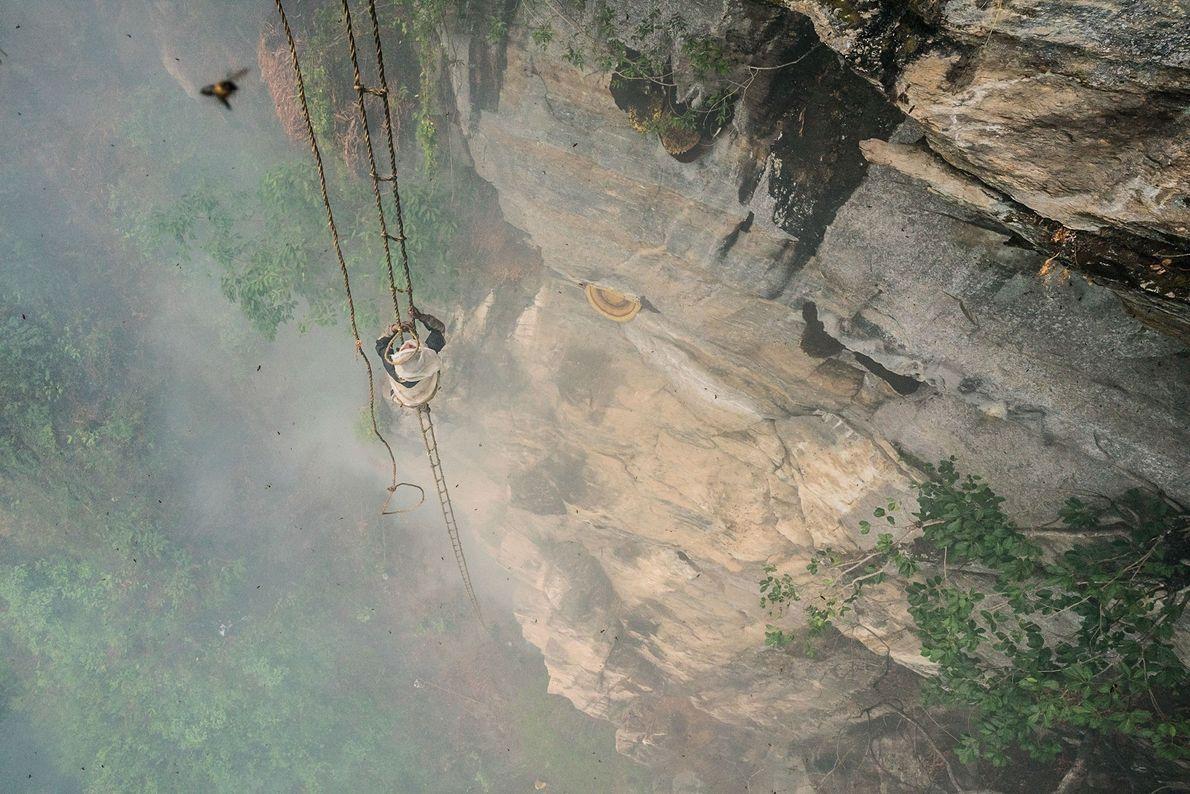 """A 90 metros do chão, o """"caçador de mel"""" Mauli Dhan balança numa escada de corda ..."""