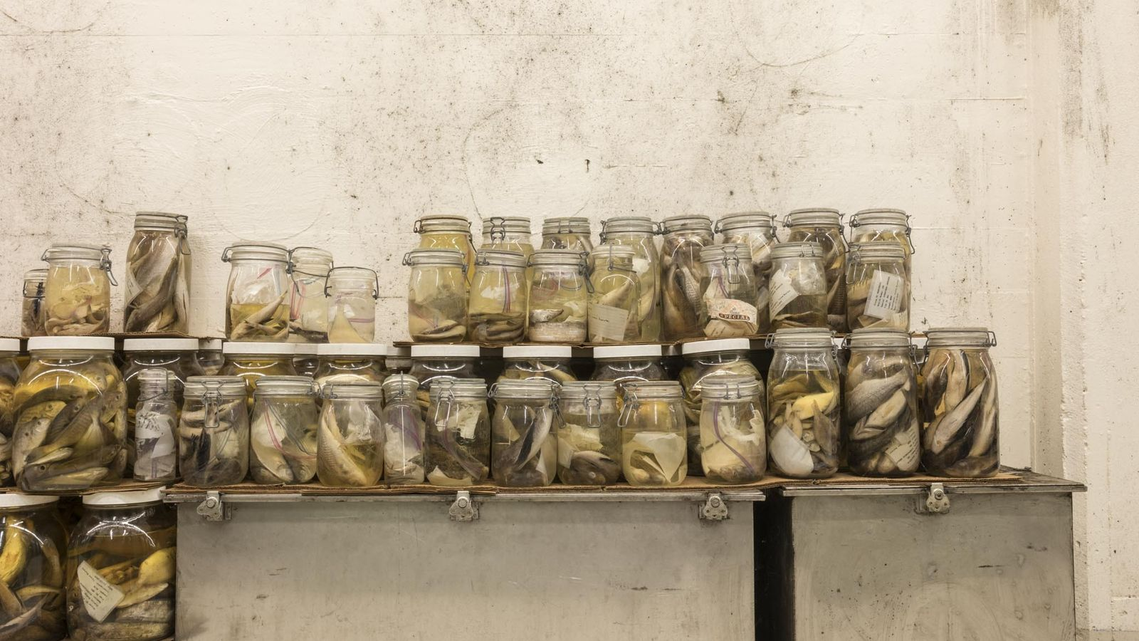 A coleção de Suttkus visa ajudar os cientistas a entender as reações das diferentes espécies ao ...