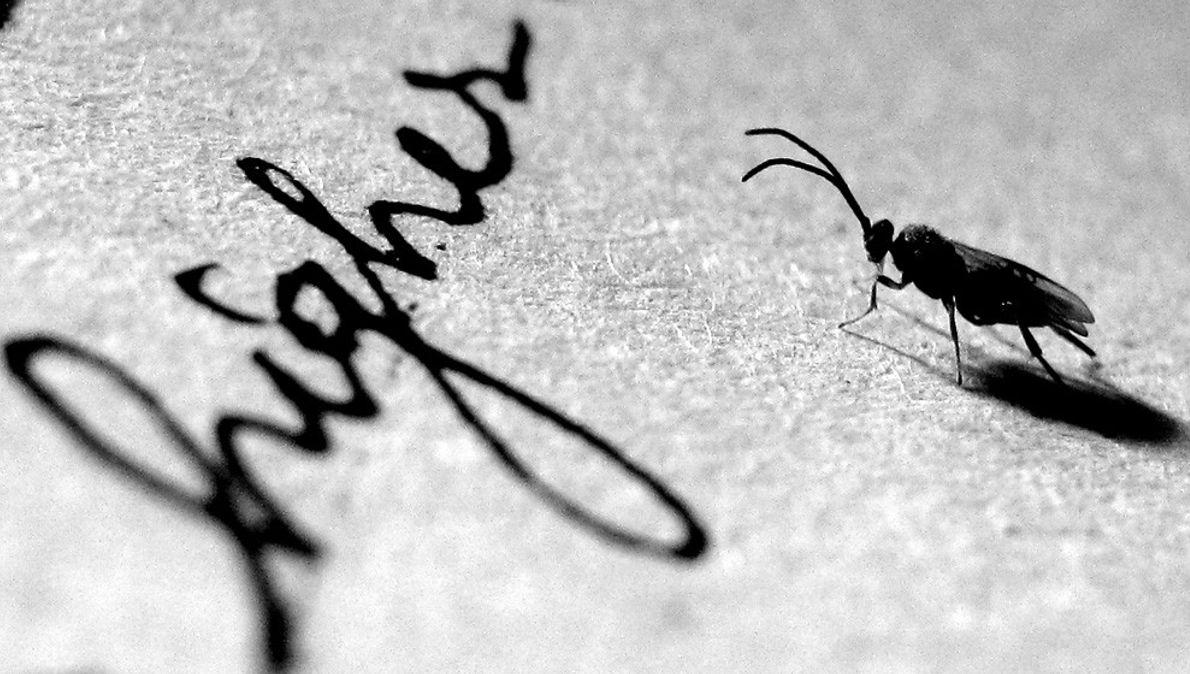 Insecto em Papel