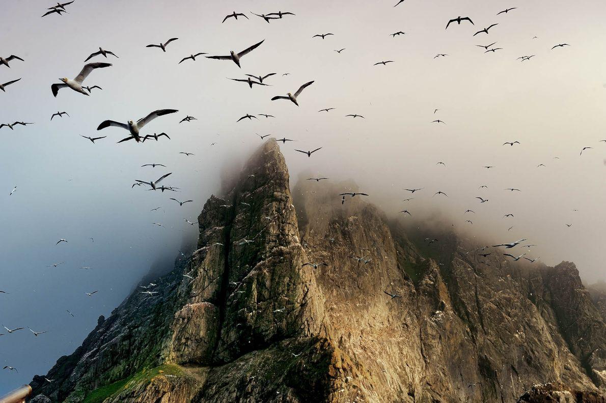 colónia de aves marinhas