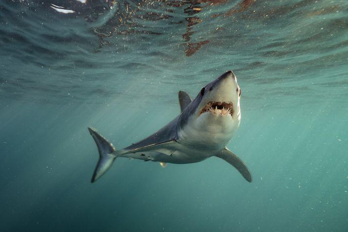 Uma das fotografias de Brian Skerry.