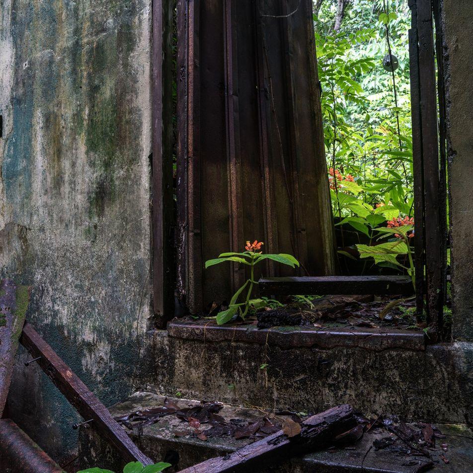 Como Uma Mortífera Ilha-Prisão Se Transformou Num Paraíso Natural