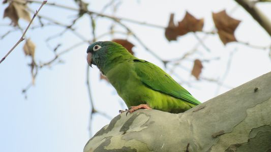 Biodiversidade está a ser registada no campus FCUL