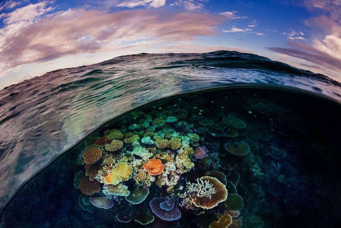 Uma onda do oceano revela o mundo oculto do saudável e robusto Recife de Opala, na ...