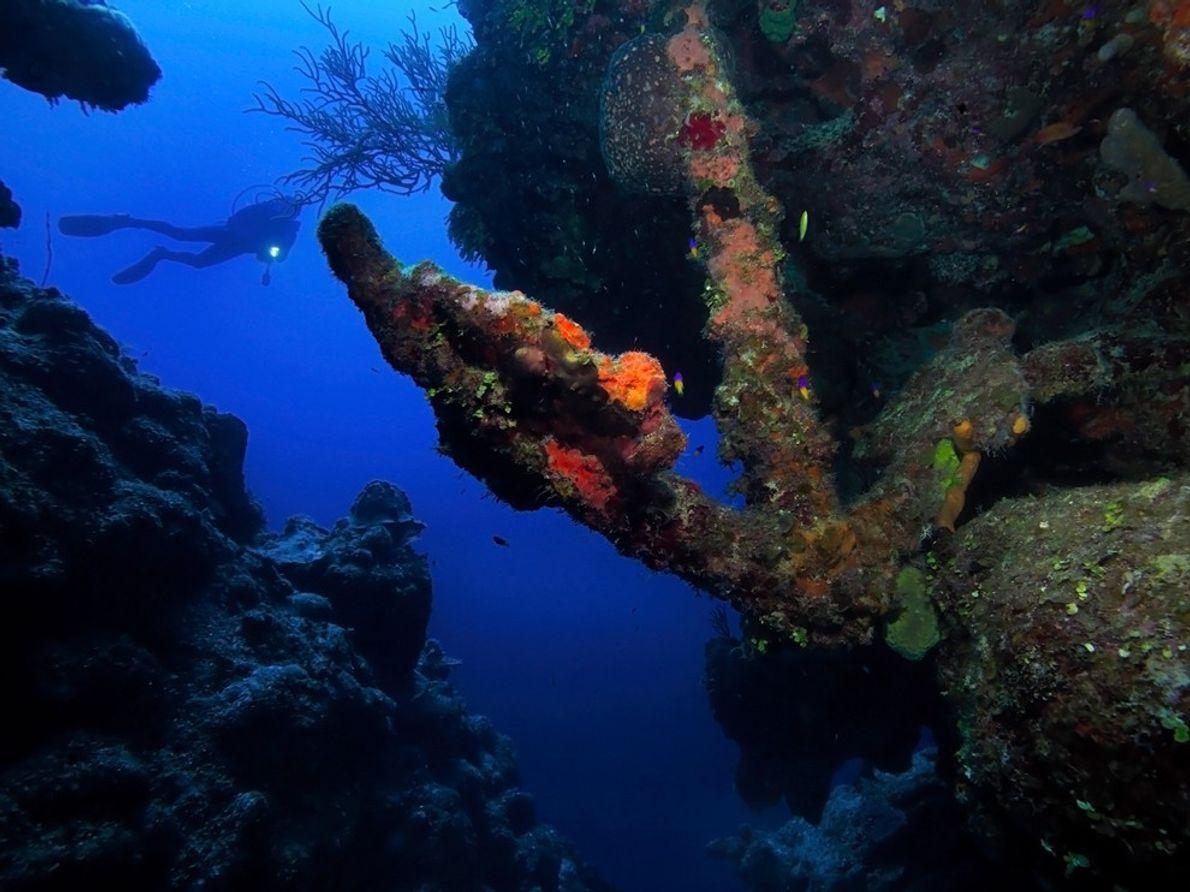 Mergulhador de Recife, Ilhas Turcas e Caicos