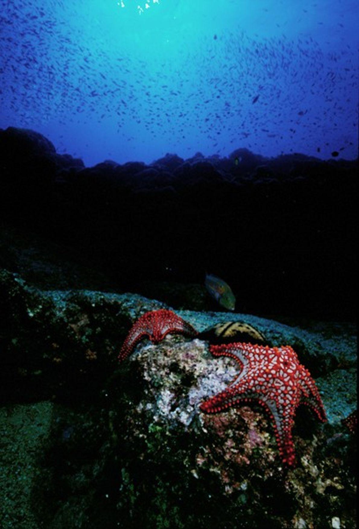 Estrelas-do-Mar, Los Cabos, Baja Califórnia