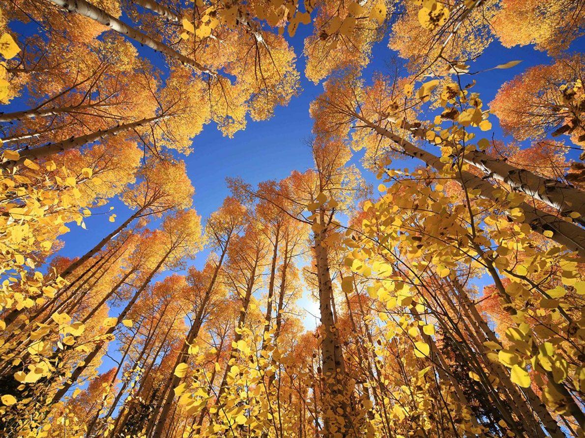 Árvores de Outono, Utah