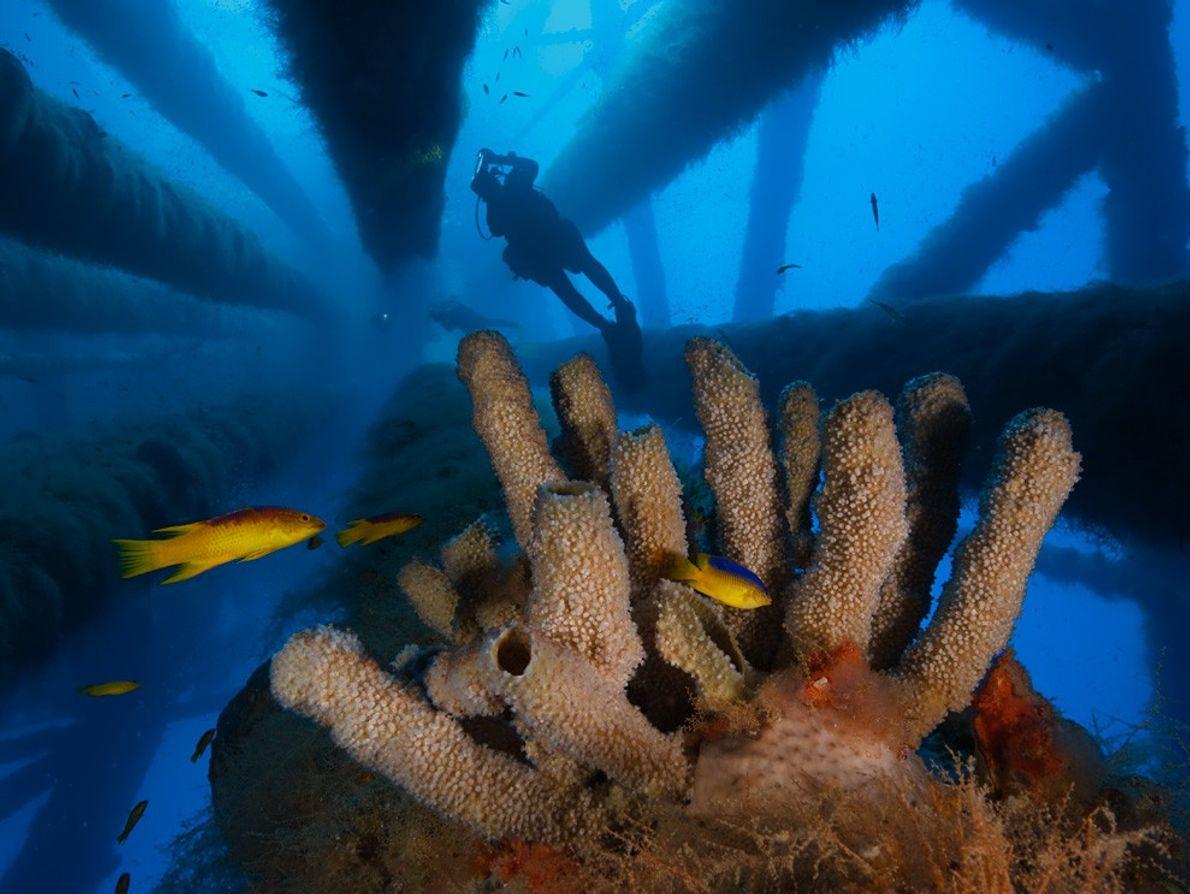 Tubos de Esponjas, Golfo do México