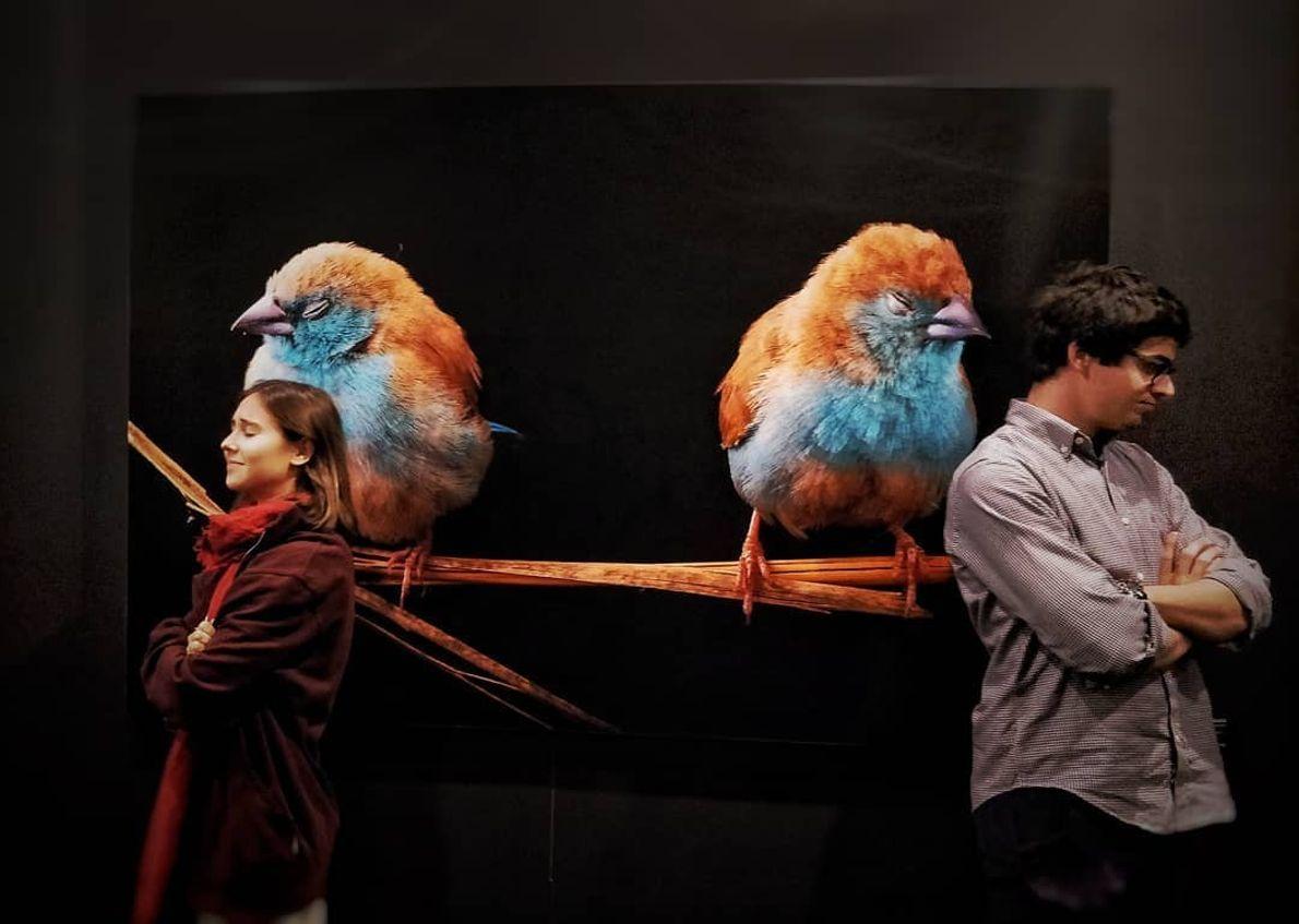 Imagem da participante @sofiamarinhopinto na exposição Photo Ark
