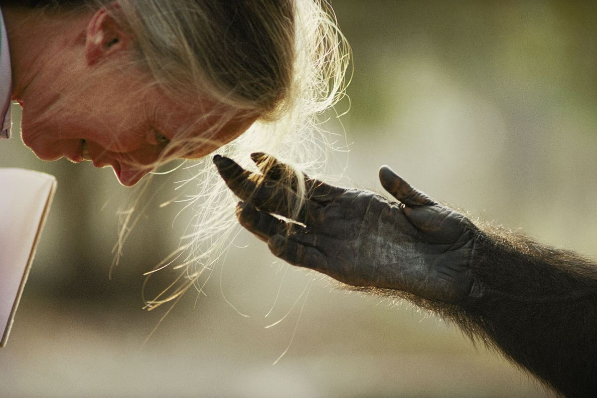 Jane Goodall e Jou Jou