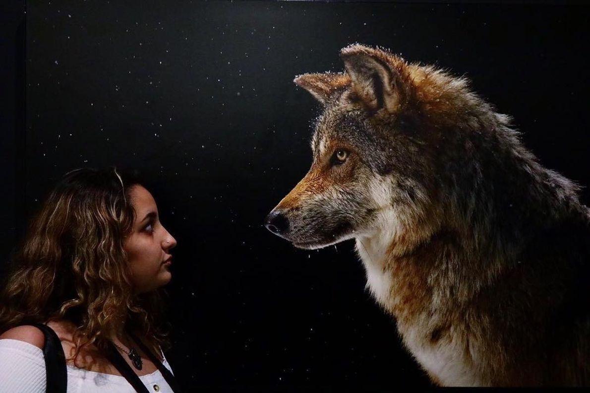 Imagem do participante @perestrelo.photos na exposição Photo Ark