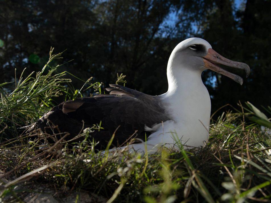 A ave mais velha do mundo fez 70 anos