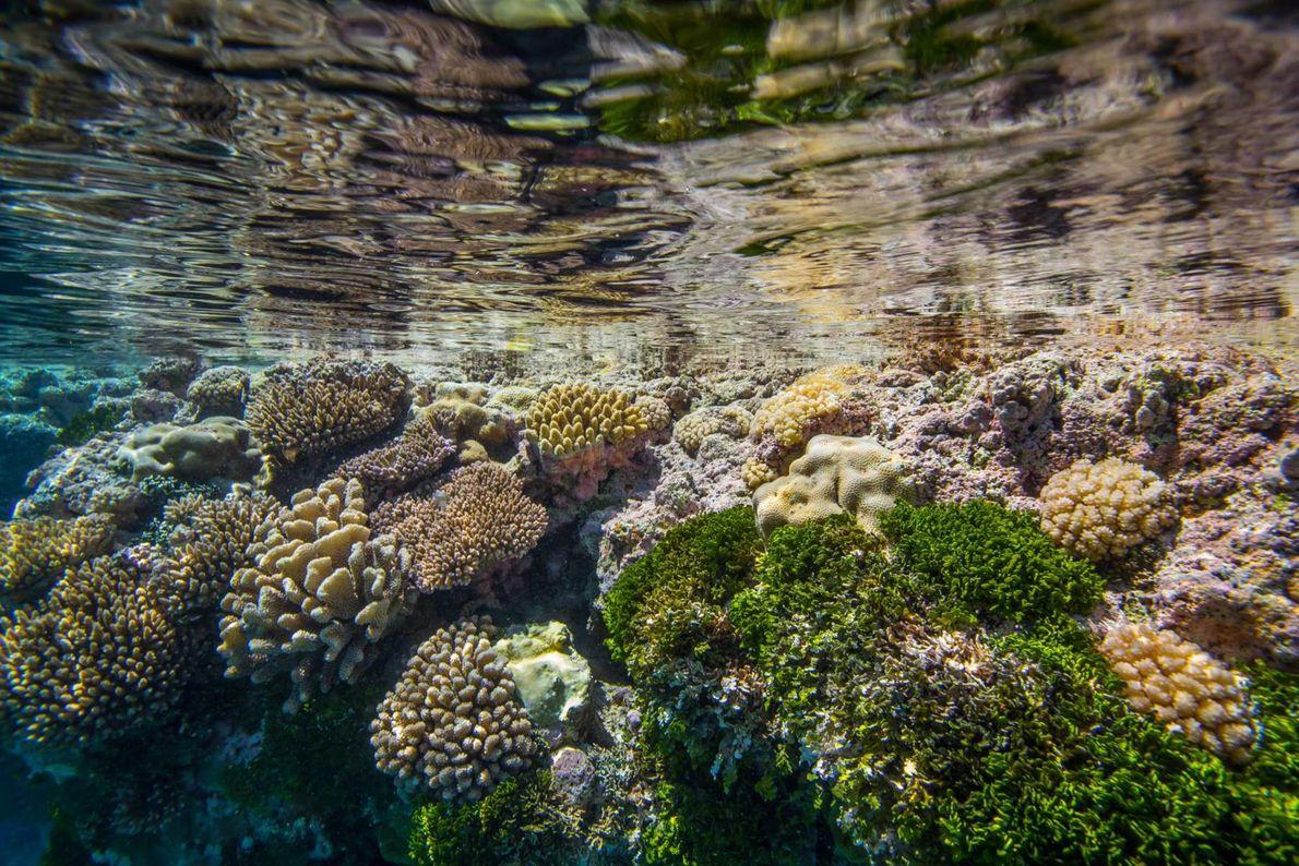 Litoral elevado de coral de Niue