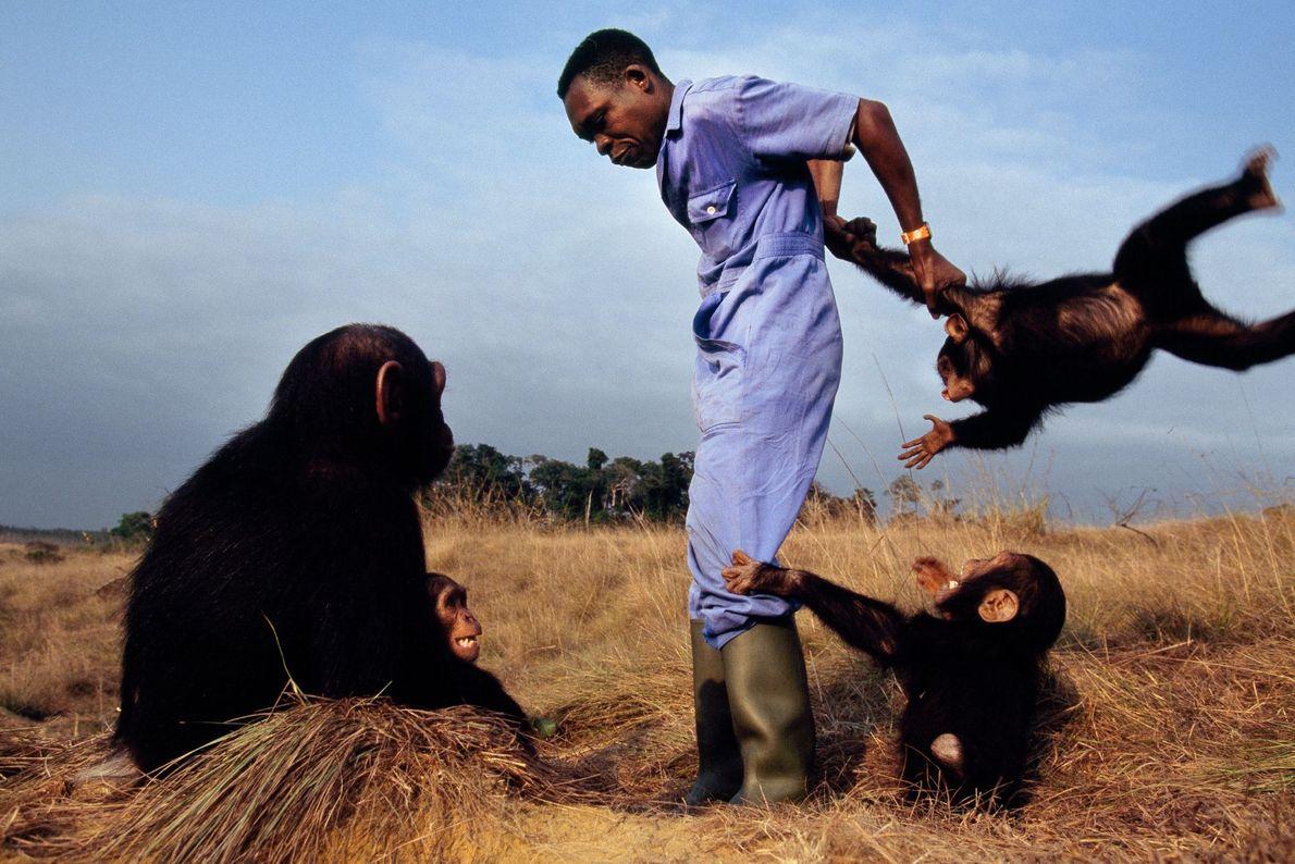 O cuidador Ludovic Rabasa com chimpazés orfãos