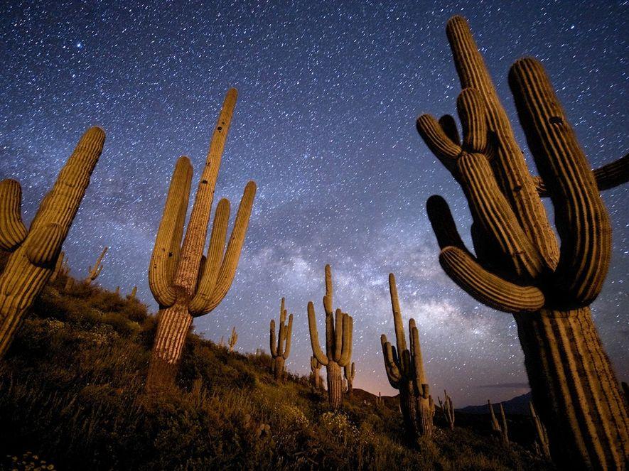 Galeria Fotográfica: Fotografar o Céu Noturno
