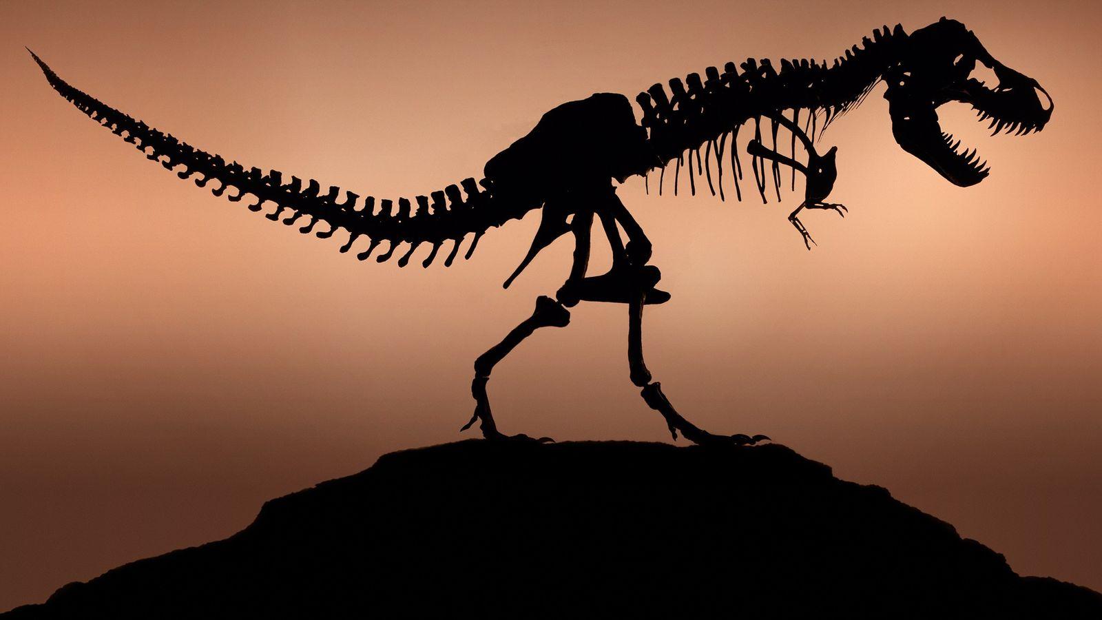 Será o Verdadeiro T. Rex Parecido com o que Aparece no Jurassic Park?