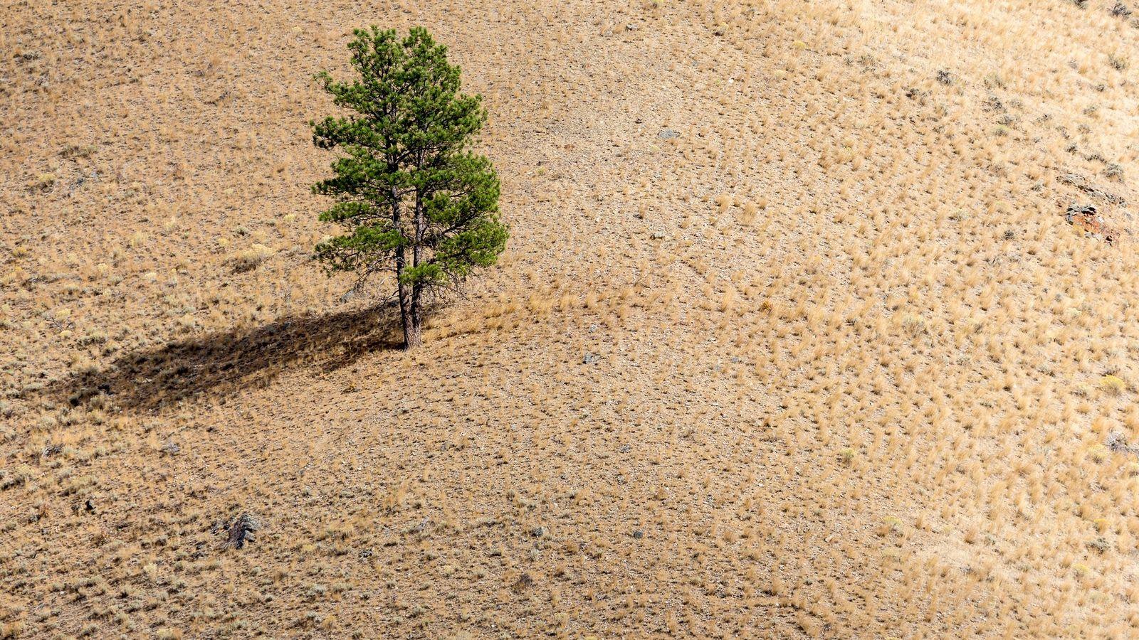 A única árvore na encosta, ao final da tarde.