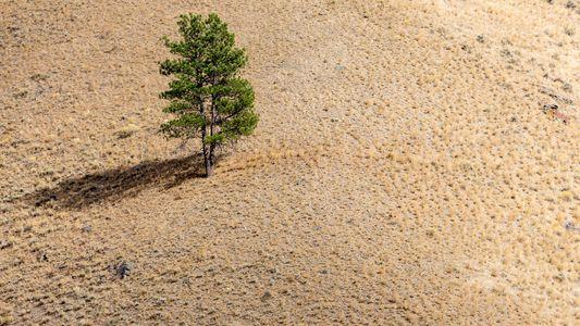 As Árvores Pedem Ajuda - E agora os Cientistas Conseguem Perceber