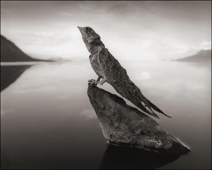 Andorinha de Pedra.