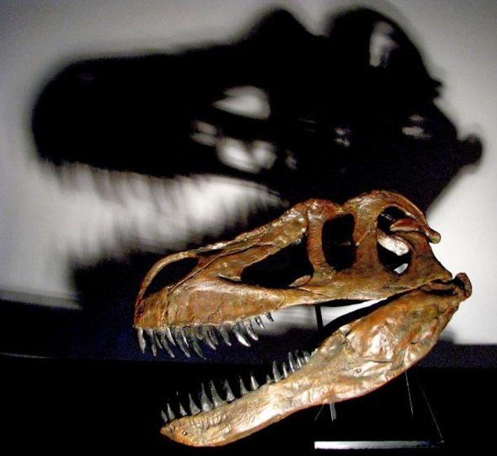O crânio grande e forte do Torvosaurus gurneyi permitia-lhe derrubar as suas presas.