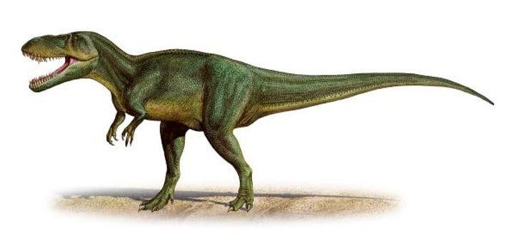 Os cientistas pensaram inicialmente que os fósseis do T. gurneyi pertenciam ao Torvosaurus tanneri, uma espécie ...