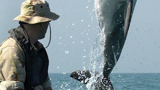 Baleias e Golfinhos Militares: Quem os Usa e Para Quê?