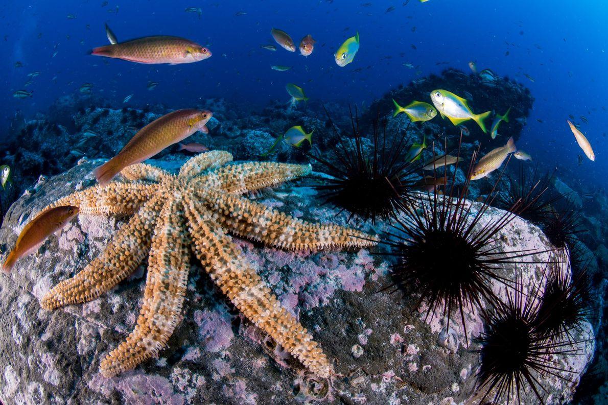 Estrelas do mar e ouriços-de-espinhos-compridos