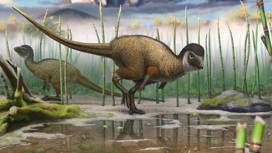 Descoberta siberiana sugere que a maioria dos Dinossauros tinham penas