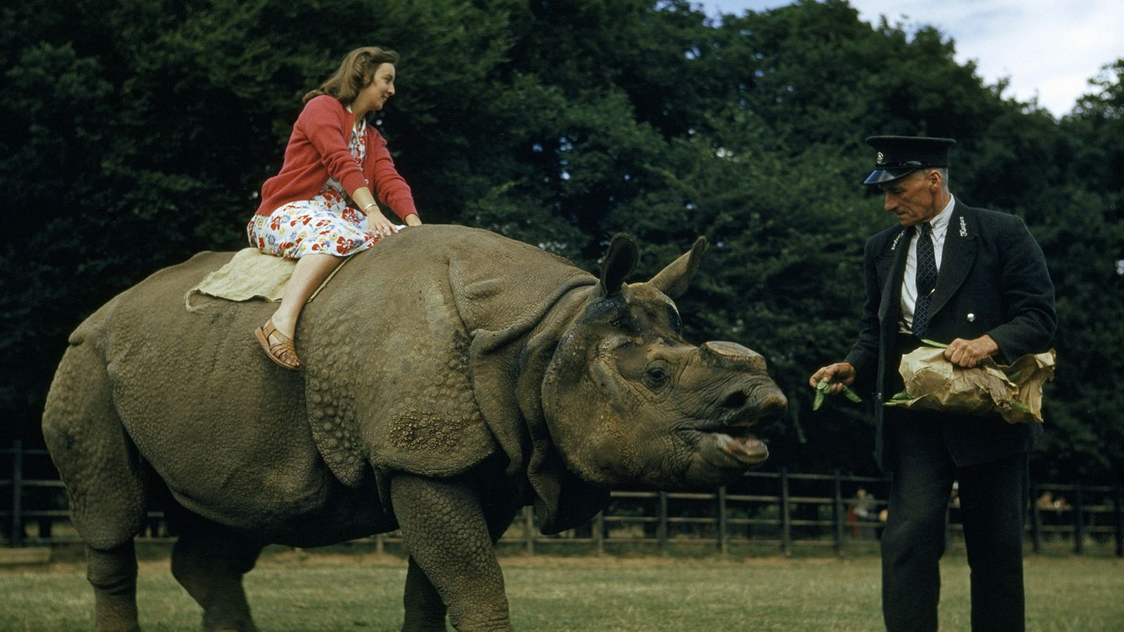 rinoceronte ervilhas londres