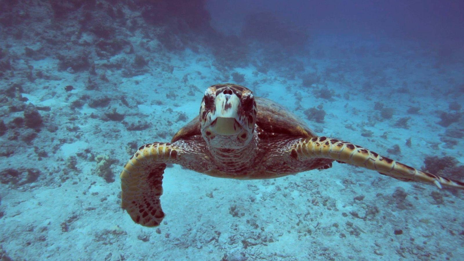 Factos sobre os Oceanos