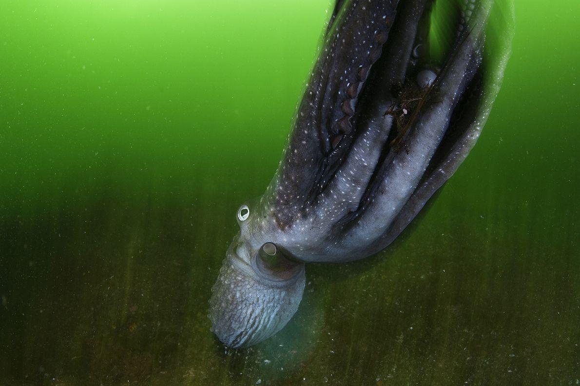 Verdes subaquáticos