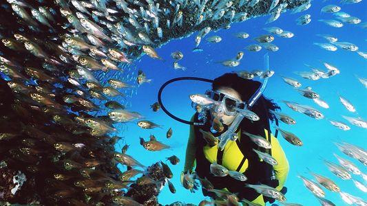 Fotografias da Grande Barreira de Coral, Património Mundial da Humanidade
