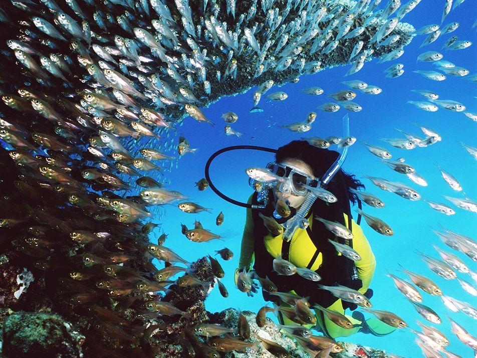 Mergulhe nas Águas Vibrantes da Grande Barreira de Coral