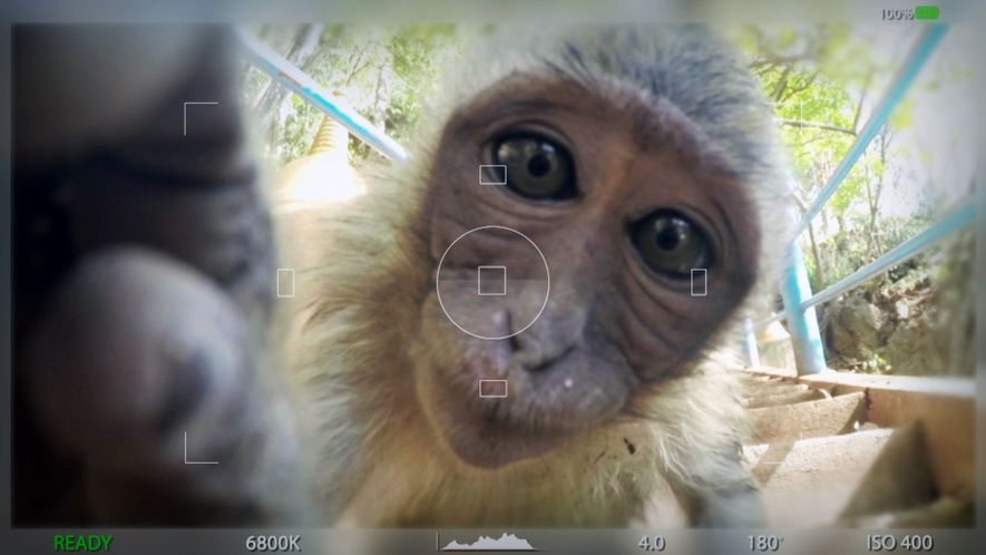 Amazing animal selfies: Os Selfies mais selvagens