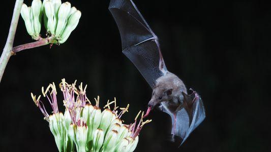 Os Morcegos Não São Tão Assustadores Quanto Pensamos