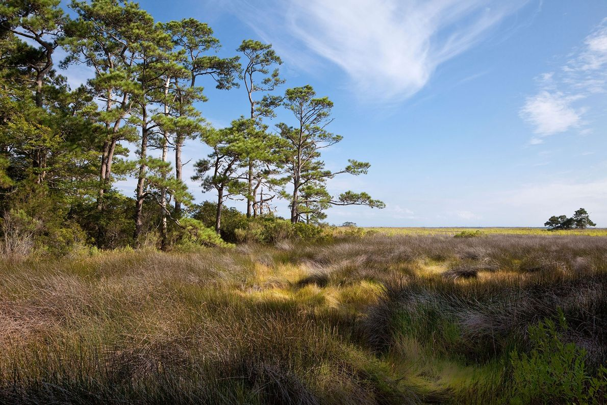 Imagem de uma paisagem no trilho Roanoke em Nags Head, Carolina do Norte