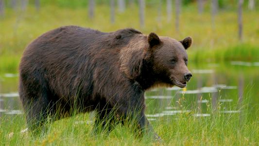Factos sobre Ursos