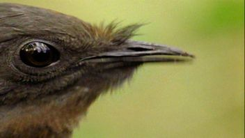 Motosserra de imitações de pássaros, alarme de carro e muito mais