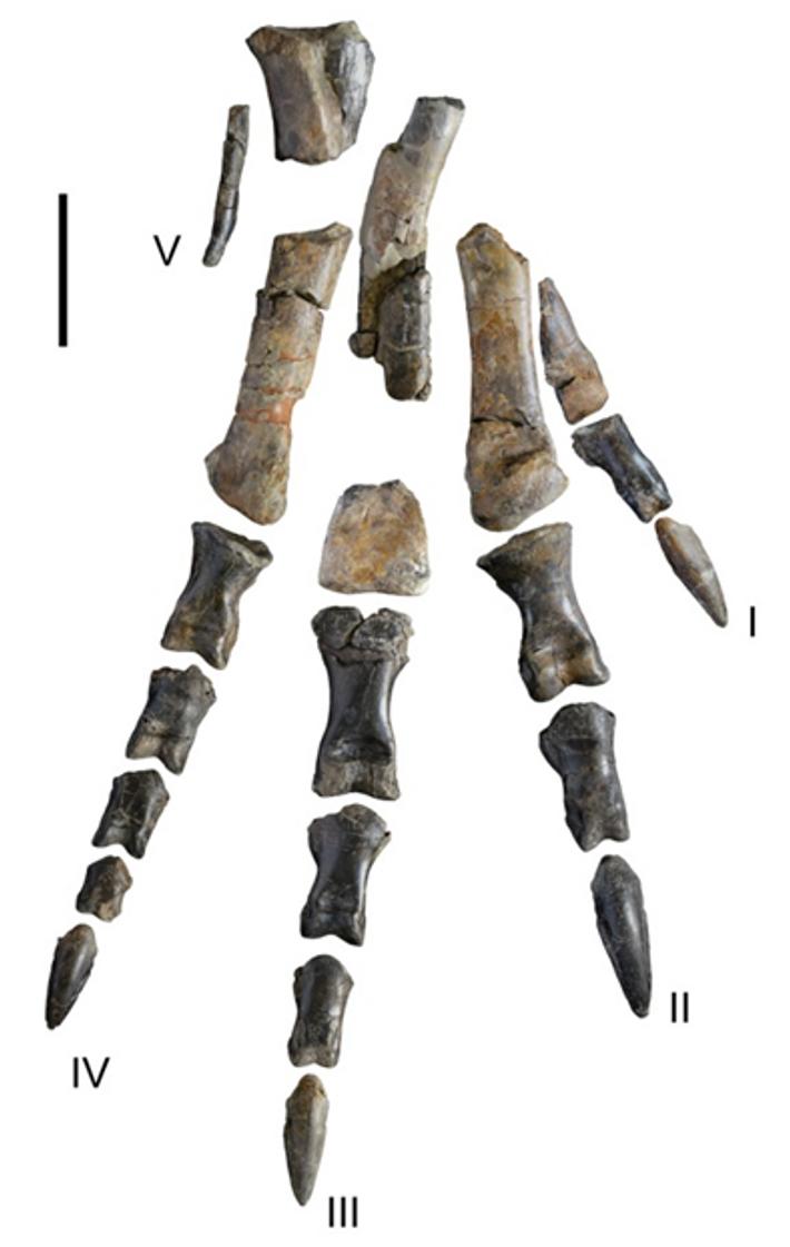 dinossáurios carcarodontossáurios