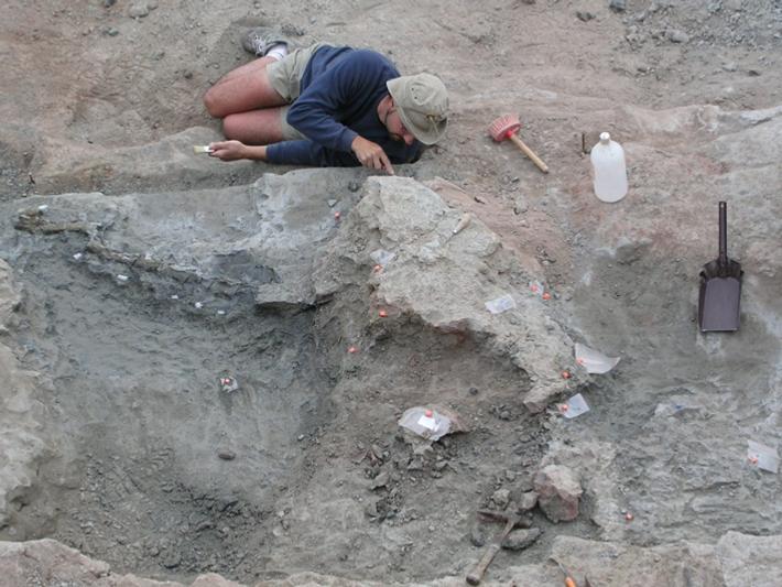 Fotografia de trabalhos de paleontologia de dinossáurio carcarodontossáurios