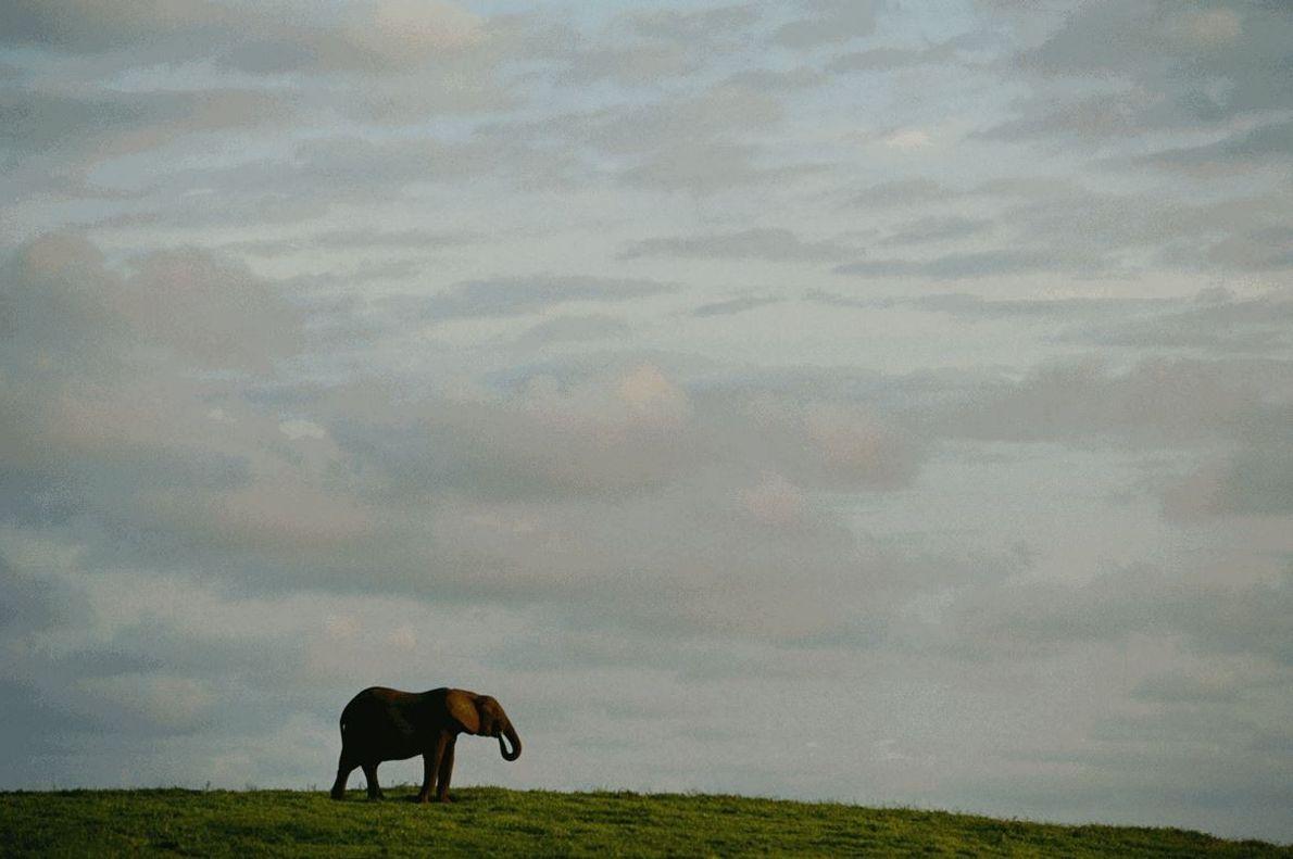 No Gabão, um elefante solitário parece observar os céus.