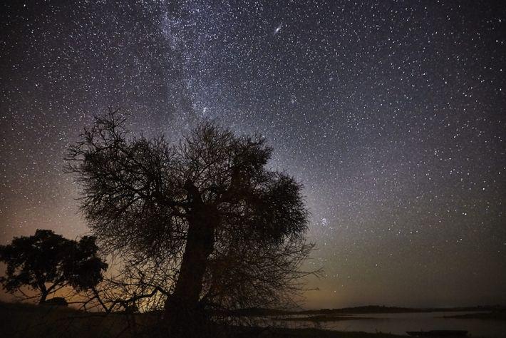 Árvore e céu estrelado