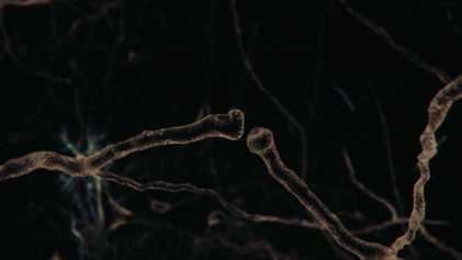 O Conectoma Cósmico