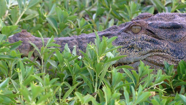 Wild Australia:   A cidade dos Crocodilos
