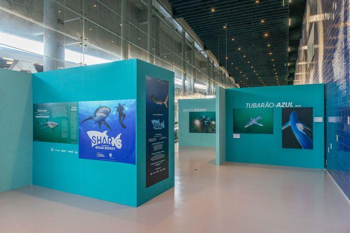 Exposição Sharks, no Oceanário de Lisboa até janeiro de 2019.