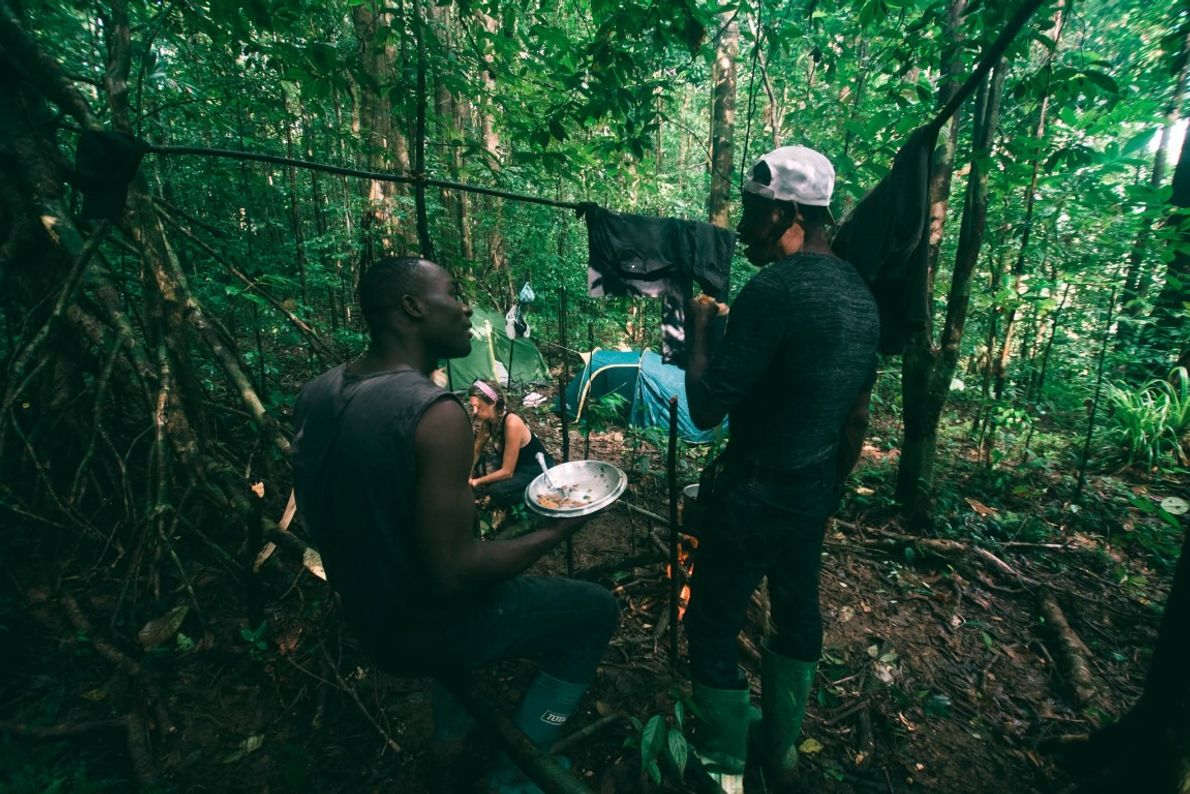 Expedição na floresta nativa da ilha para poder fotografar a espécie no próprio habitat natural. A ...