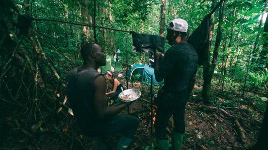 Búzios-d'Obô, os Gigantes Ameaçados da Floresta