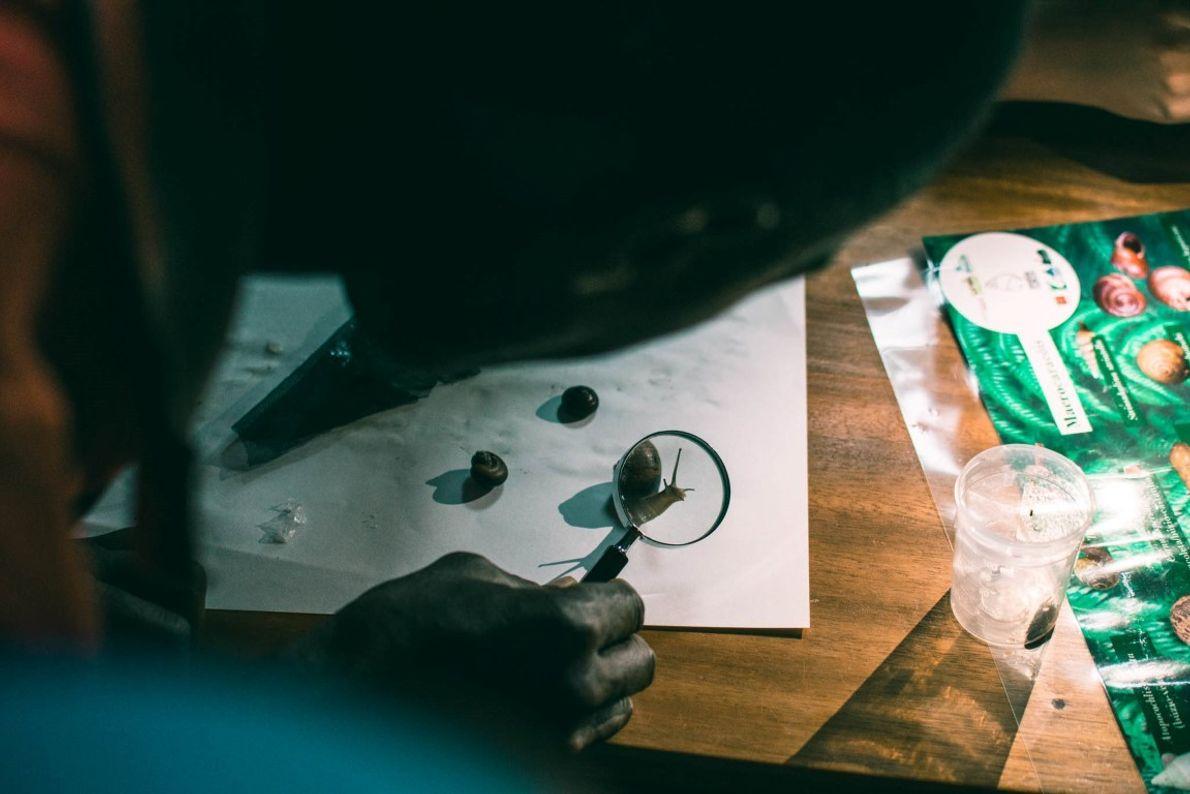 Os eco-guias de São Tomé atendem a uma série de três workshops para poder identificar as ...