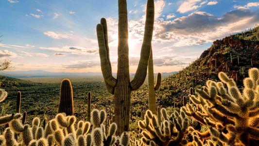 Factos sobre Desertos